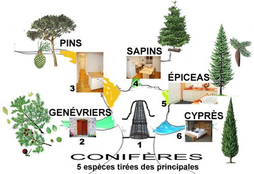 Mémoriser les Coniferes_Maison